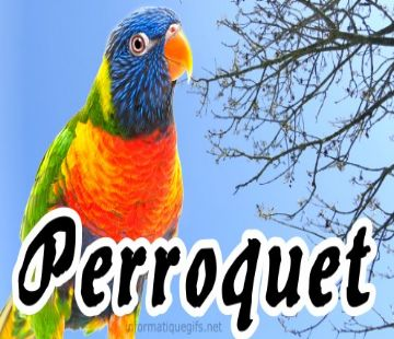 animal perroquet